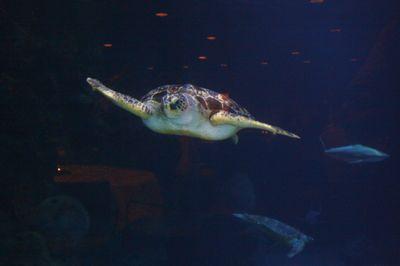 IMG 0872 turtle.JPG
